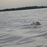 Flussdelfine