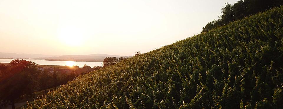 Weinbegleitung Irsslinger Weine